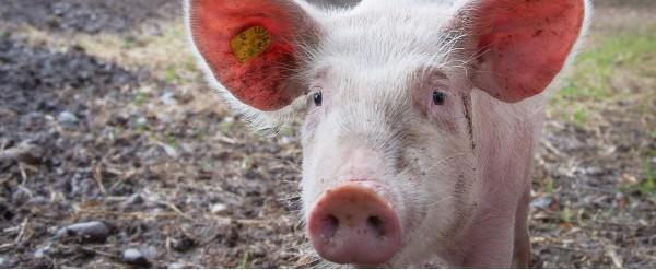 Nouvelle rubrique, le bien-être animal